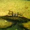 Ontdek de onderwaterwereld